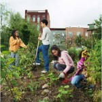 kids in garden working